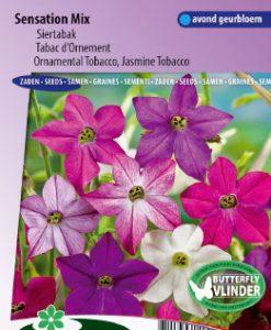 Ornamental or Jasmine Tobacco Sensation Mix Seeds 4 Garden