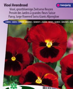 Pansy Swiss Giants Alpenglow Seeds 4 Garden
