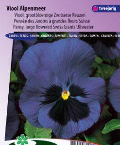 Pansy Swiss Giants Ullswater Seeds 4 Garden