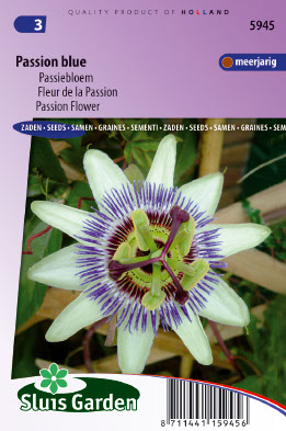 Passion Flower Passion Blue Seeds 4 Garden