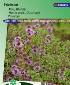 Pennyroyal mint (Mentha pulegium) Seeds 4 Garden