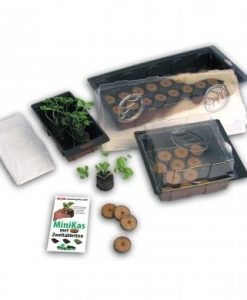 Plastic Greenhouse (24 places) Seeds 4 Garden