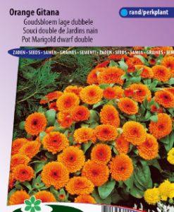 Pot Marigold Orange Gitana dwarf double Seeds 4 Garden