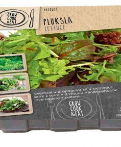 Propagator Lettuce Seeds 4 Garden