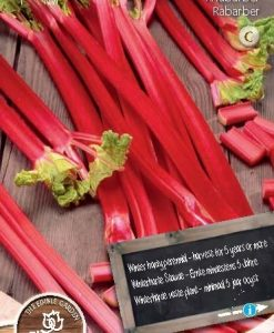 Rhubarb Red Champagne Seeds 4 Garden