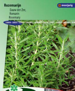 Rosemary (Rosmarinus officinalis) Seeds 4 Garden