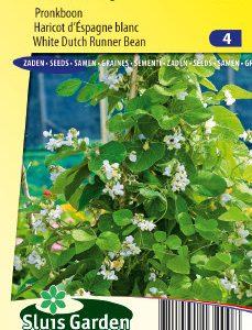 Runner Bean Emergo (Dutch White) Seeds 4 Garden