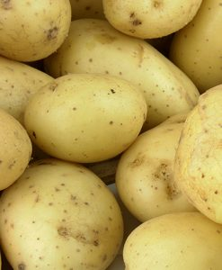 Seed-Potato Bintje 1 kg Seeds 4 Garden