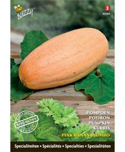 Specialties Pumpkin Pink Banana Jumbo Seeds 4 Garden