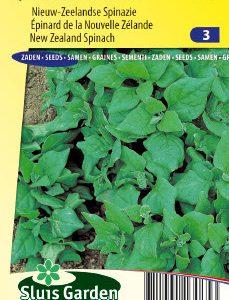 Spinach New Zealand (Summer/autumn crop) Seeds 4 Garden