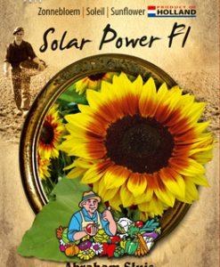 Sunflower annuus Solar Power F1 Seeds 4 Garden