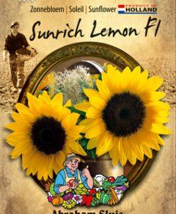 Sunflower annuus Sunrich Lemon F1 Seeds 4 Garden