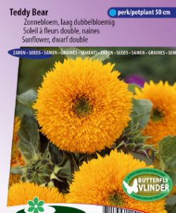 Sunflower dwarf double Teddy Bear Seeds 4 Garden