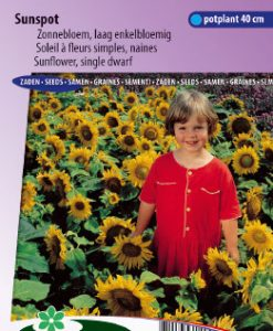 Sunflower dwarf single Sunspot Seeds 4 Garden