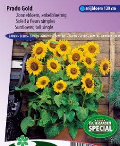 Sunflower semi-tall Prado Gold Seeds 4 Garden