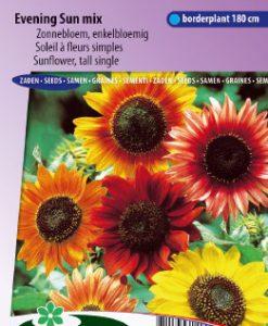 Sunflower tall single Evening Sun Mix Seeds 4 Garden
