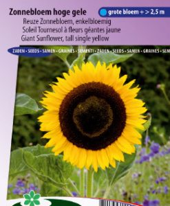 Sunflower tall single yellow Seeds 4 Garden
