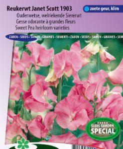 Sweet pea Janet Scott 1903 (Heirloom variety) Seeds 4 Garden