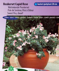Sweet pea dwarf Cupid Rose Seeds 4 Garden