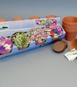 Terra Cotta Butterfly/Fragrance collection Seeds 4 Garden