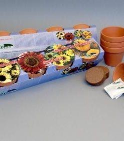 Terra Cotta Sunflower Collection Seeds 4 Garden
