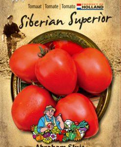 Tomato Siberian Superior Seeds 4 Garden