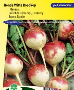 Turnip Bicolor