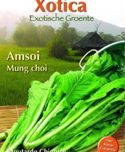 Xotica Mung Choi Seeds 4 Garden