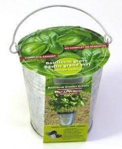 Zinc bucket Basil Seeds 4 Garden