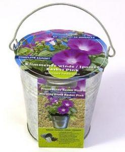 Zinc bucket Ipomoea hed. Basket pink Seeds 4 Garden