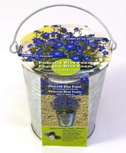 Zinc bucket Phacelia Bleu Foam Seeds 4 Garden