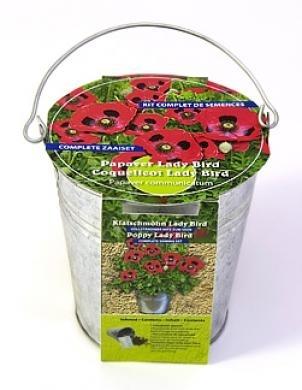 Zinc bucket Poppy Lady Bird Seeds 4 Garden