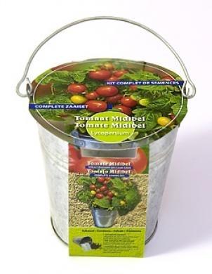 Zinc bucket Tomato Midibel Seeds 4 Garden