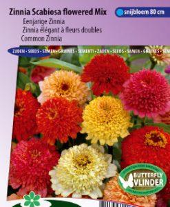 Zinnia Scabiosa flowered Mix Seeds 4 Garden