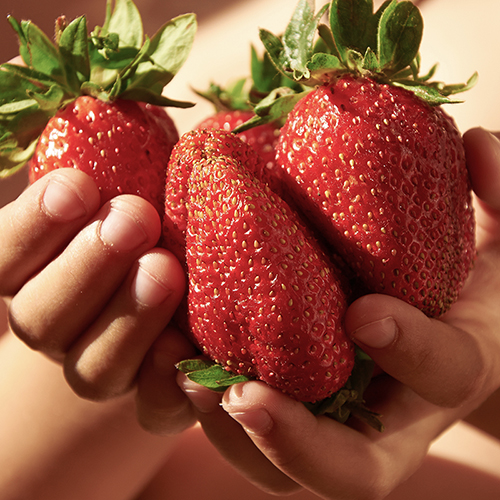 Strawberry Sweet Colossus YouGarden