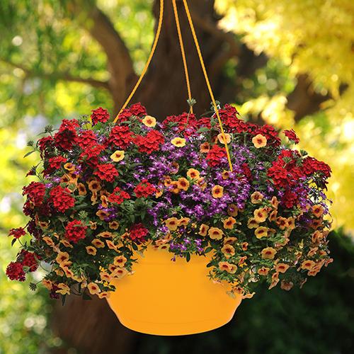 'Fruit Salad' Pre-Planted Baskets YouGarden