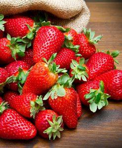 Everbearer Strawberry 'Sweet Summer' x 20 runners