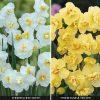 Daffodil 'Cheerfulness Duo'