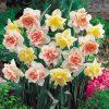 Daffodil 'Double Duo'