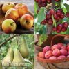 Garden Fruit Tree Orchard Collection Thompson & Morgan