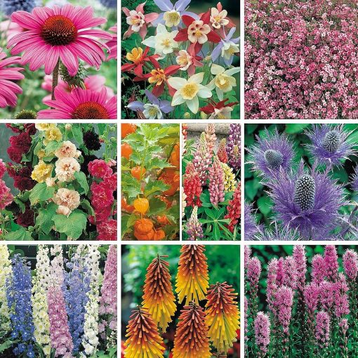 Perennial Best Value Collection