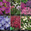 Perennials 'Carpet Collection' (Garden Ready)