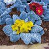 Primrose 'Arctic Blue'