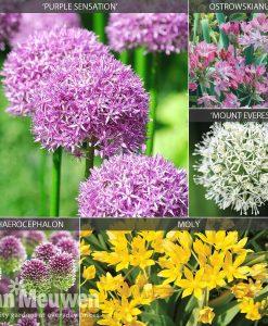 Allium 'Cottage Garden Collection'