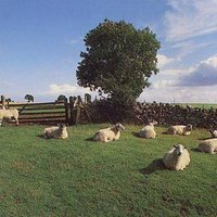The Klf Chill Out Used CD at Music Magpie Image