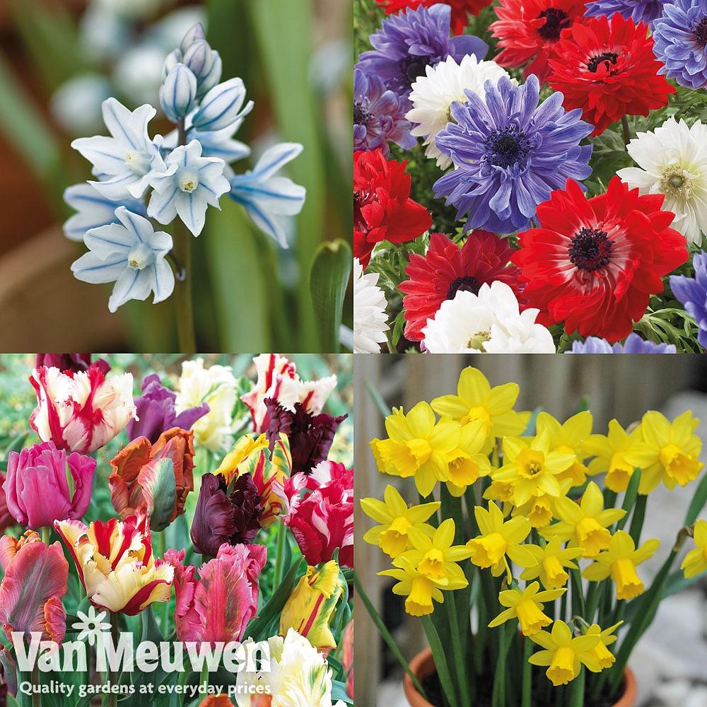 Lucky Dip Bulb Collection Van Meuwen