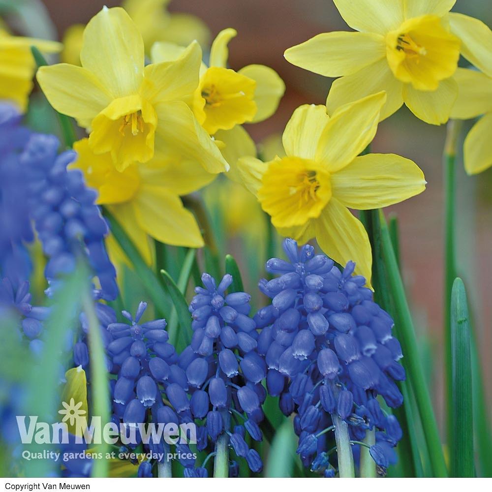 Spring Bulb Mix Van Meuwen