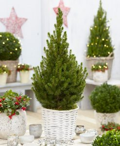 Contemporary Christmas Tree with Festive Basket - LARGE 100cm+ Tree