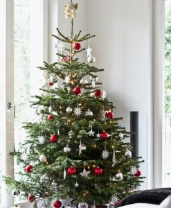PRE-ORDER: Fresh Cut Non-Drop Luxury Nordman Fir Christmas Tree (approx 7-8ft) + Delivered 30th Nov - 5th Dec +