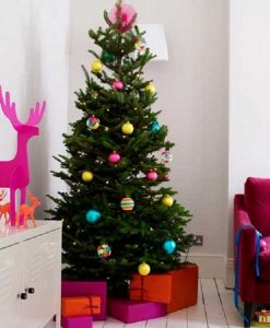 PRE-ORDER: Nordmann Fir Christmas Tree - Fresh Cut Non-Drop Luxury Tree (approx 6ft)  + Delivered 14th - 19th Dec +